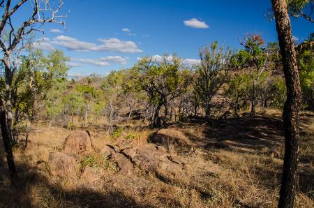 australian outback: Dry eucalyptus forest in the australian outback. Stock Photo