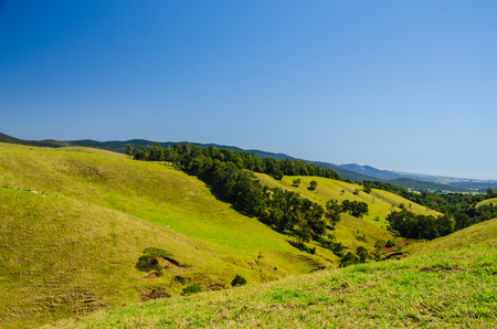 meadowland: Meadowland in the Atherton Tableland on a beautiful day.