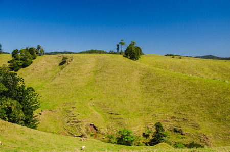 meadowland: The Atherton Tableland in North Queensland, Australia.