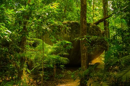 Hiking through the tropical rainforest near Mossman Gorge.