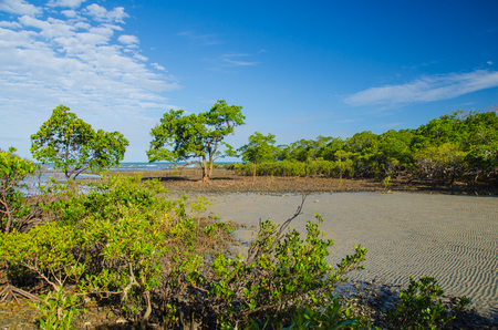 downunder: Mangroves at the coast of the Cape Tribulation.