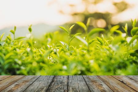 wood floor green tea and fresh leaves Stock Photo