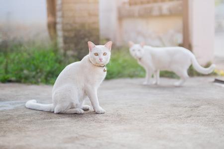 cute white cat sitting