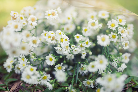 Vintage Flowers on grass Stock Photo