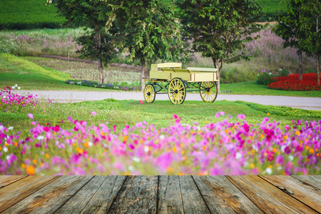 wood floor on carriage on green grass at sunrise Stock Photo