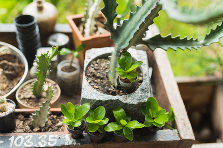Mix Cactus and Scculent on woof table Stock Photo
