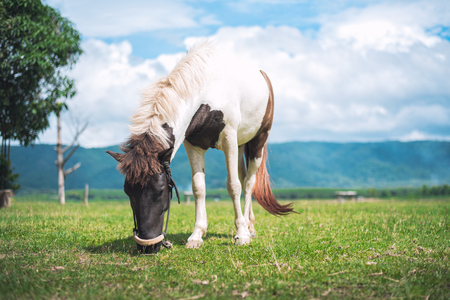 horse eating grass on the field Imagens