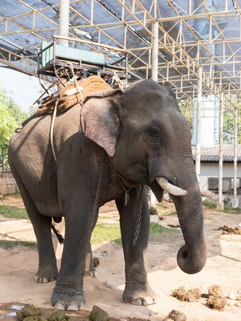 Elephant in the cage at the zoo Banco de Imagens