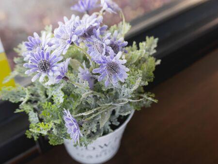close up of beautiful purple flowers