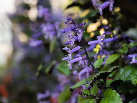 close up of purple flowers, nature flowers concept
