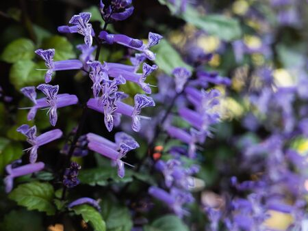 close up of purple fowers, nature flowers concept