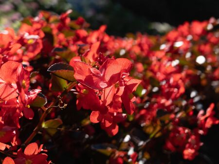 close up of red flowers, nature concept