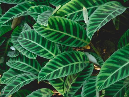 close up of green leaves, nature background concept