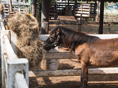 horse in the cage at the zoo, chiang rai Thailand