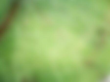 blur green background, background concept Banco de Imagens
