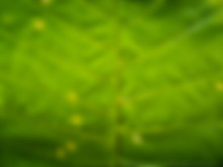 green nature background, background texture concept