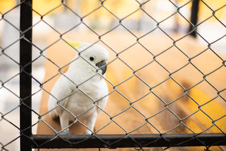 beautiful white bird in the cage at the zoo Stock Photo