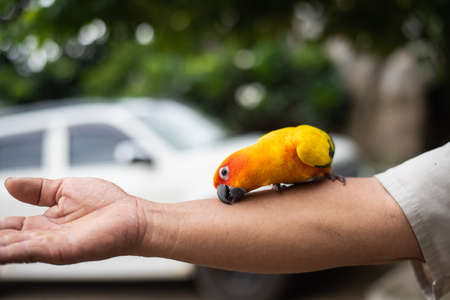 beautiful parrot bird on man's hand