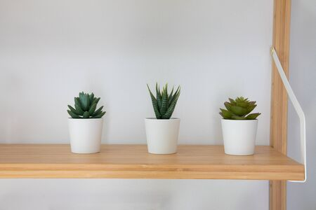 Front view of a small tree planted in three white ceramic pots placed on a wooden shelf in front of the white wall. It is a decoration in a minimalist home and coffee shop makes it look beautiful but with simplicity.