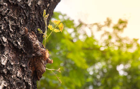 Selective focus and perspective view of new young green branches growing on the old tree with detail bark texture in the morning shows the concept of growth, freedom and hope of life and business.