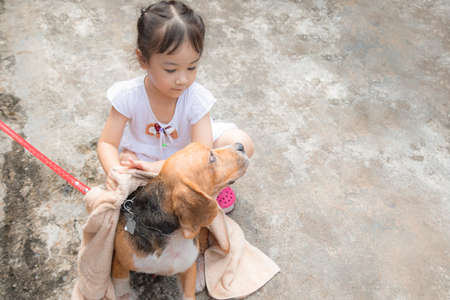 Selective focus shot with copy space of family activity which kid girl is washing her dog with love and kindness shows the friendship between human and animal to take care each other.