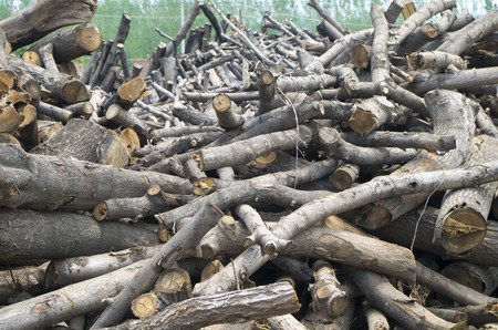 clutter: Wood clutter, precious natural resources, cut down trees Stock Photo