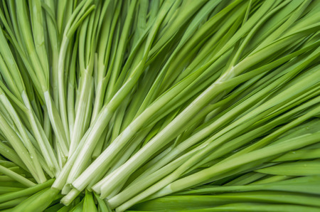chives: Garlic chives Stock Photo