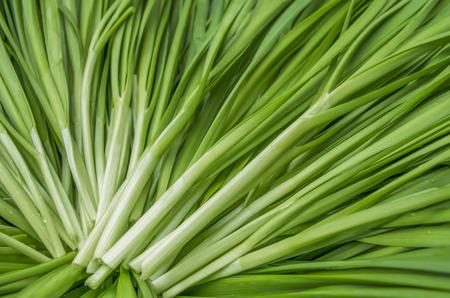 Garlic chives Standard-Bild
