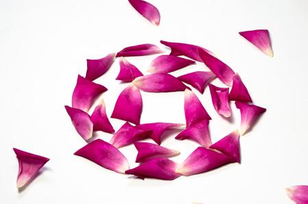 closeup of flower petals