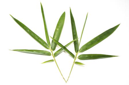 sharp: Green sharp bamboo leaves