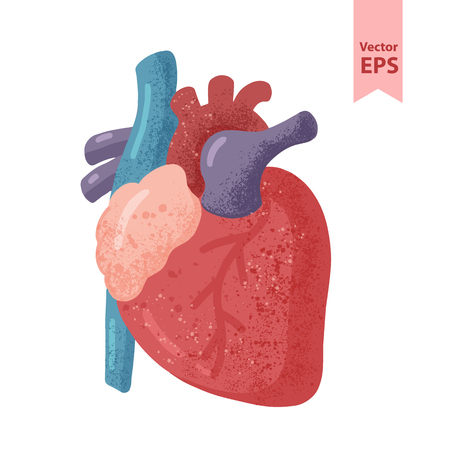 Human heart anatomy vector illustration. Organs for surgeries and transplantation. Isolated on white background, hand-drawn style. Vettoriali