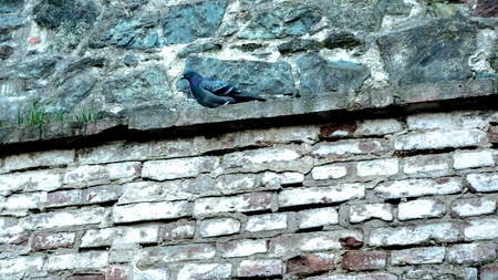 Pigeon sitting on a stone ledger