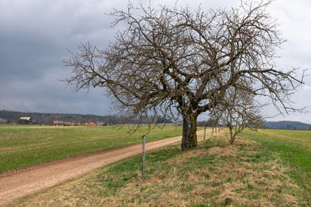 Apple tree by the road and the dark sky Stock Photo