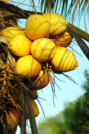 Orange coconut Stock Photo - 8101903