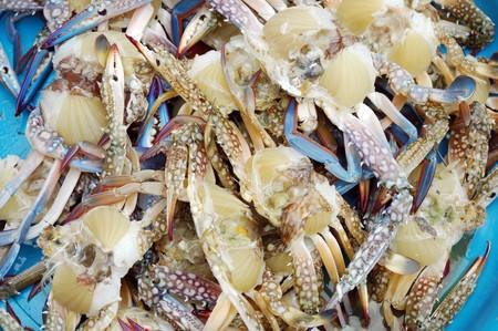 horse crab  photo