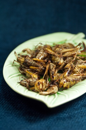 the exotic menu in thailand is fried insect  photo