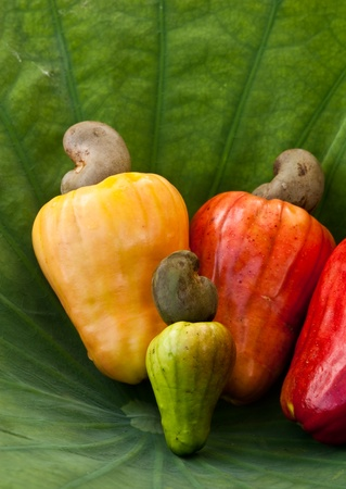 cashew tree: fresh cashew nut Stock Photo