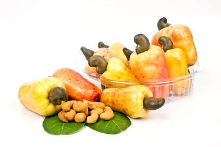 cashew: fresh cashew nut Stock Photo