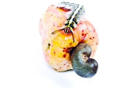 Roseapple Caterpillar Stock Photo - 13526300