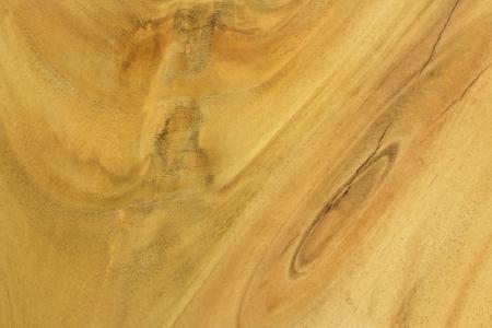 tree wood textures  Stock Photo - 15250324