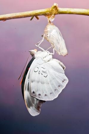 Beautiful Butterfly Stock Photo - 19902522