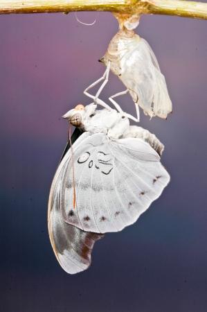 Beautiful Butterfly Stock Photo - 19902510