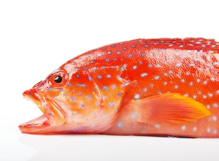 greenling: red grouper Stock Photo