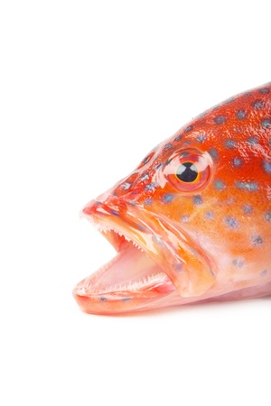 red grouper Stock Photo - 16941648