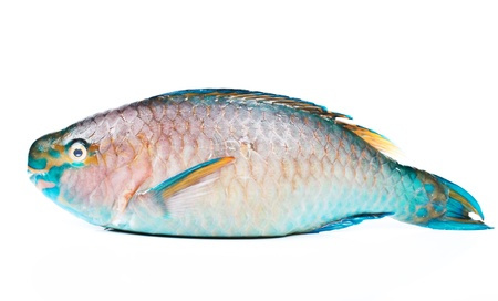 fish form andanman sea Stock Photo - 16941657