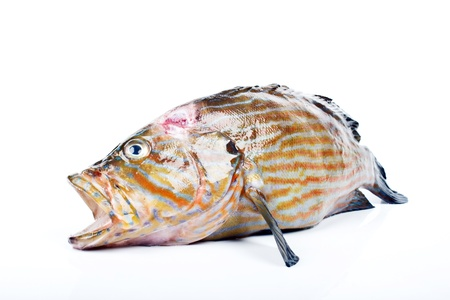 daurade: grouper Stock Photo