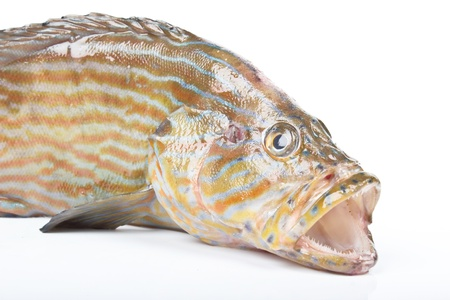 grouper Stock Photo - 16941719