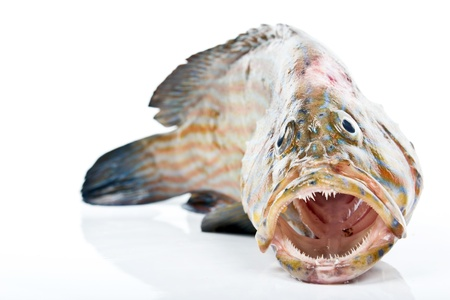 greenling: grouper Stock Photo