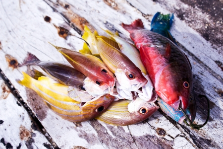 greenling: andaman fishes
