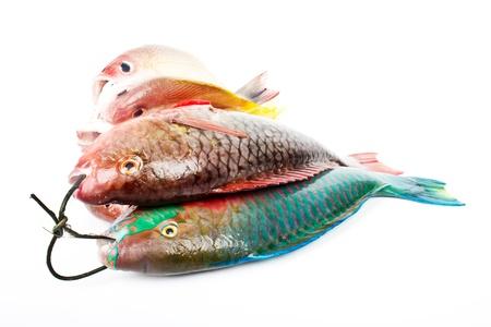 daurade: andaman fishes